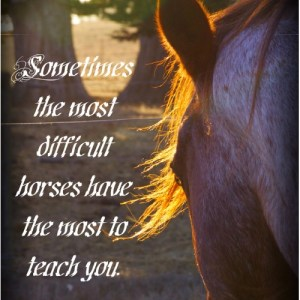 speak your horse's language