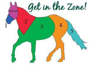 zones of horse body