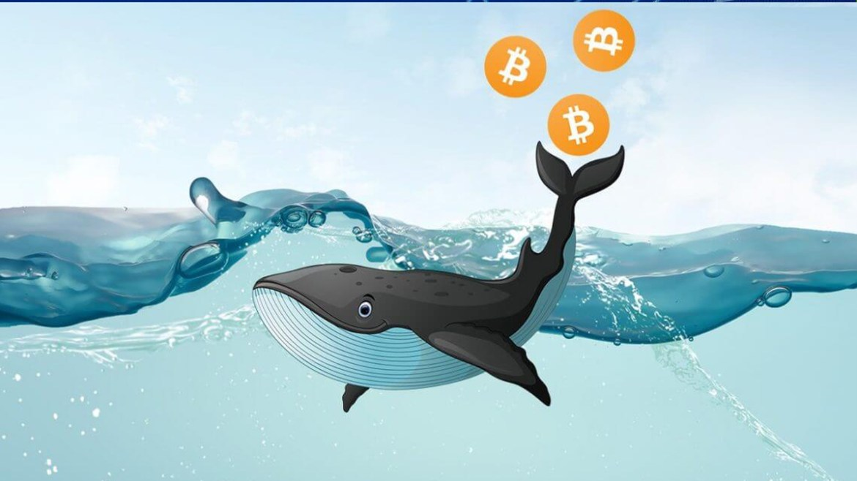 Bitcoin balinalarını