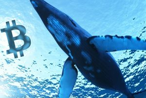 bitcoinin bircok hamlesini bilen balina yatirim yapacagi altcoini acikladi