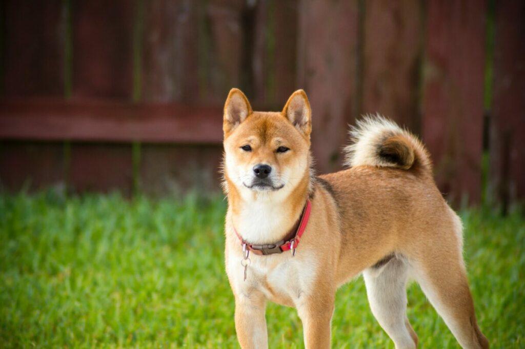 Başarılı Analist: Dogecoin Fiyatı Sıradaki Seanslarda Bu Seviyelerde Olabilir!