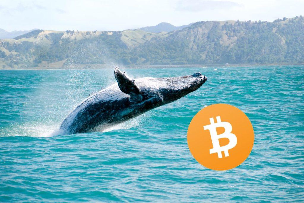 Balina Alarmı: Son 1 Saatte Coinbase'e Yüzmilyonluk Bitcoin'ler Gitti!