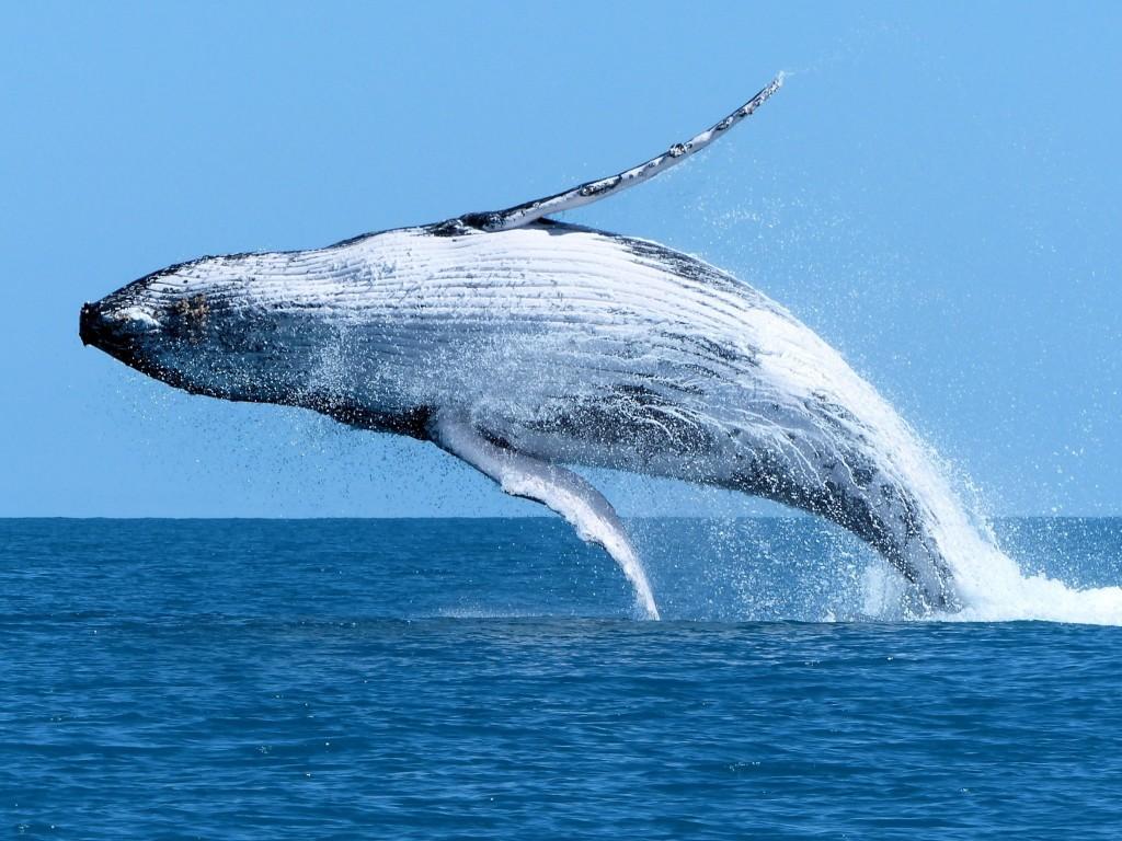 Balinalar, Bir Haftada Bu Altcoin'den Bir Ton Topladı!