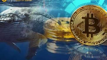 Devasa Bitcoin balinaları uyandı! 26 milyon dolarlık BTC taşındı
