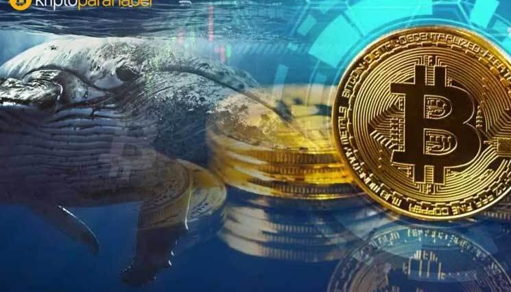 BTC fiyatı değişken hale gelince, Bitcoin ve Ethereum balinaları hızla yüzeye çıktı