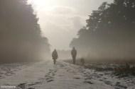 Snow Scene II
