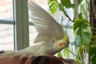 Jules, a strange Bird III