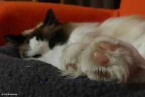 New Cat Pillow I