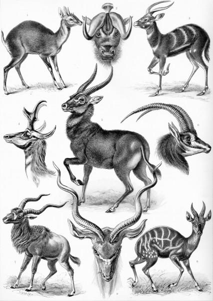 100 Beautiful Illustrations of Biologist Ernst Haeckel