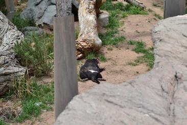ABQ Zoo - 08-03 - 002