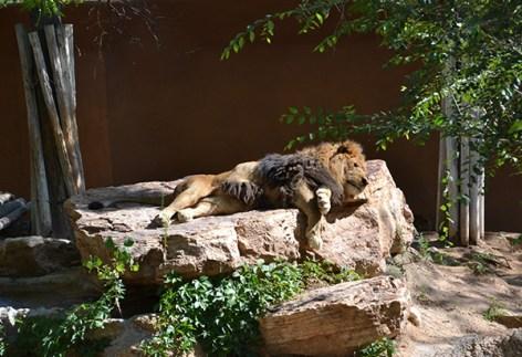 ABQ Zoo - 08-03 - 014