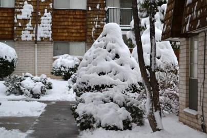 2015-02-28 snow 3