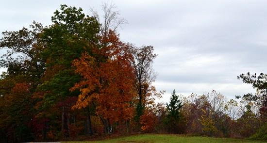Kentucky Trees 1b