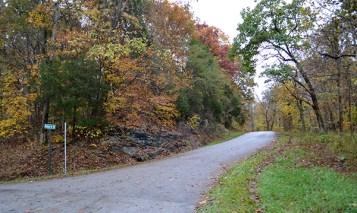 Kentucky Trees 8b