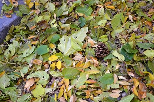 Fall Leaves 3b