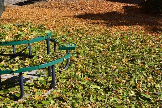 Fall Leaves 4b
