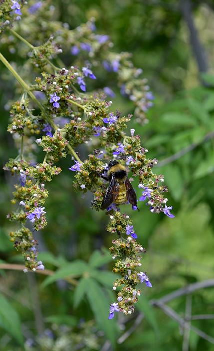 Bumblebee 3B