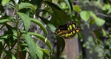Butterfly 9B