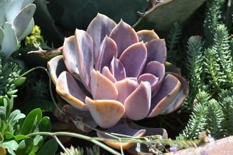 Cactus 3B