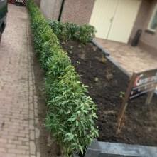 Haag naast pad