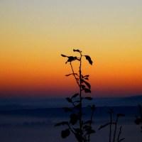Fog and sunrise III