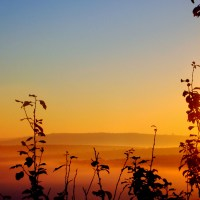 Fog and sunrise IV