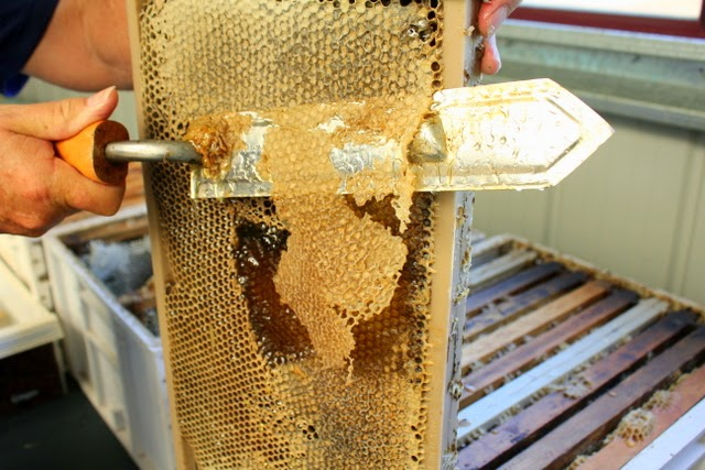 Bee Keeping (Apiculture) in Nepal