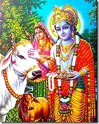 Lord Krishna tending to cows