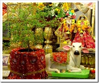 Tulasi Devi with Radha and Krishna