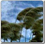 Wind blowing through trees