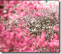 Flowers falling