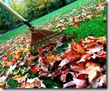 [Raking fall leaves]