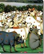[cows]