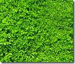 [green grass]