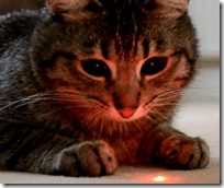 [cat and laser pointer]