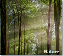 [nature]