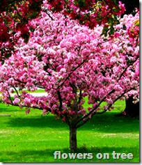 [flowers on tree]