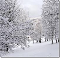 [winter snow]