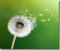 [flower wind]