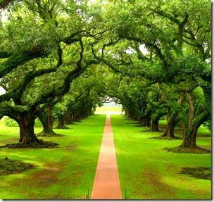 [trees]