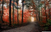 beautiful_forest_path_autumn-wallpaper-1680x1050