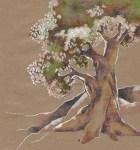 Old_Fruit_Tree