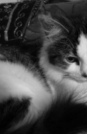 catsk