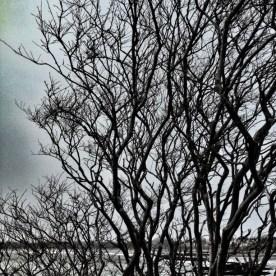 21-Tree