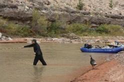 "San Juan River: Fly fishing ""assistant"""