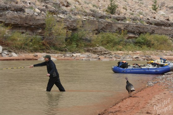 "San Juan River: Fly fishing ""assistant"""