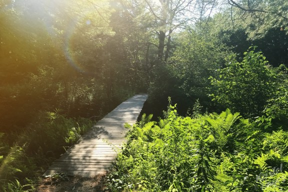Stroudwater Trail
