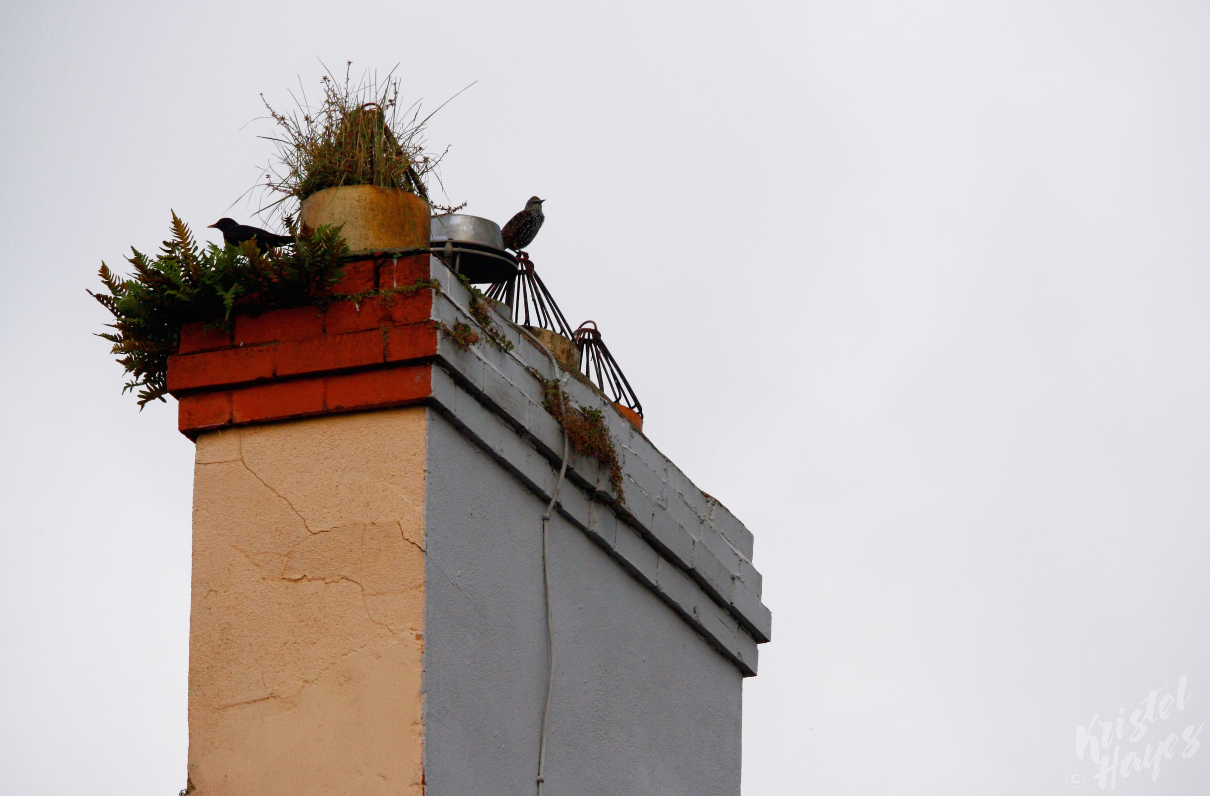 Carlow Chimney Birds-River Barrow, Ireland