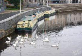 Swans & Narrowboats in Carlow-Barrow River, Ireland