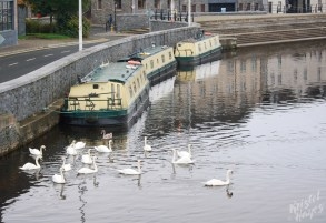 Swans & Narrowboats in Carlow-Barrow River, Ireland
